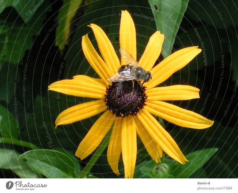 Nature Flower Summer Animal Yellow Spring Switzerland Insect Bee
