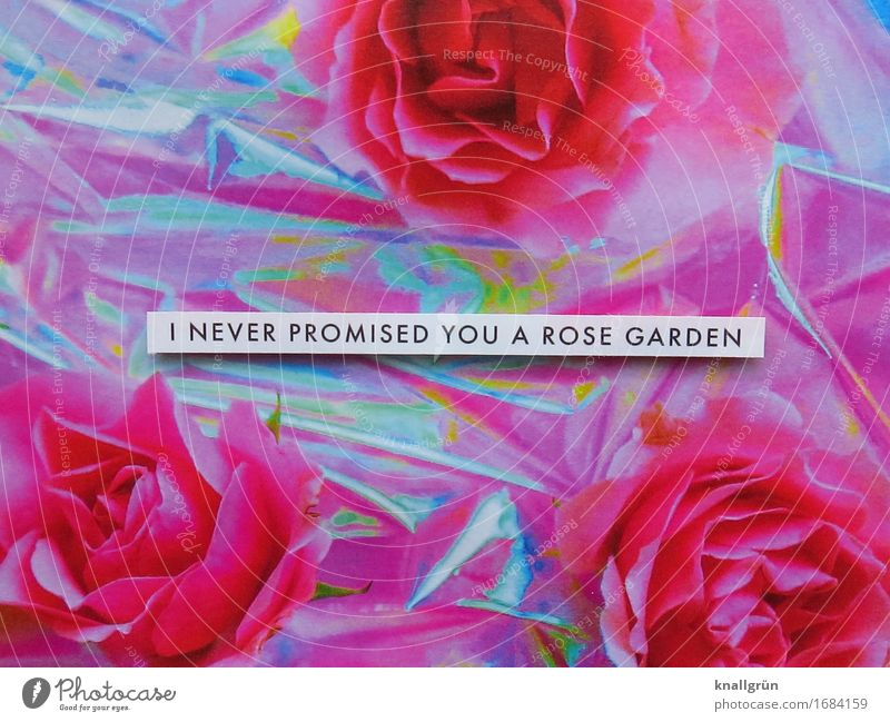 I never promised you a rose garden Plant Rose Characters Signs and labeling Communicate Sharp-edged Pink Black Silver White Emotions Moody Acceptance Patient