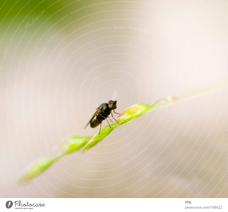 Nature Green Plant Summer Animal Grass Contentment Brown Small Fly Flying Break Bushes Wing Thin Wild