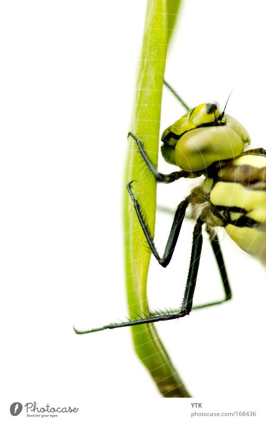 Nature Green Beautiful Animal Grass Flying Wild animal Exceptional Natural Esthetic Threat Technology To hold on Fantastic Insect Hunting