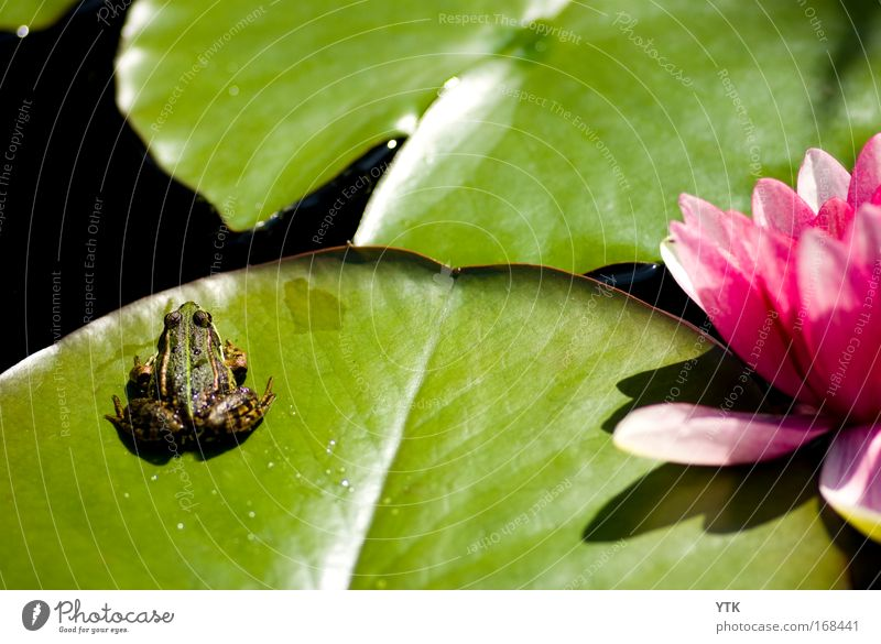 idyllic pond Colour photo Multicoloured Exterior shot Detail Copy Space top Copy Space middle Day Shadow Contrast Silhouette Reflection Nature Plant Animal