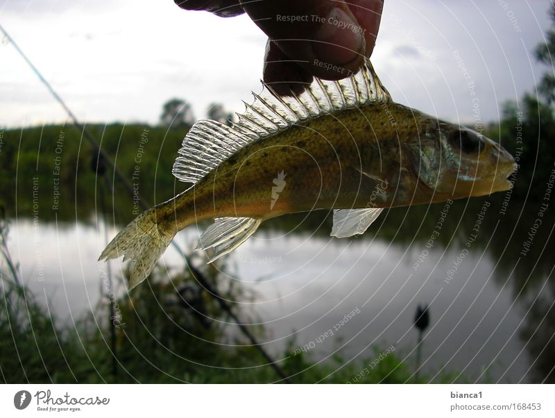 Nature Glittering Wet Speed Fish Dive Catch Hunting Enthusiasm Endurance Patient Slimy