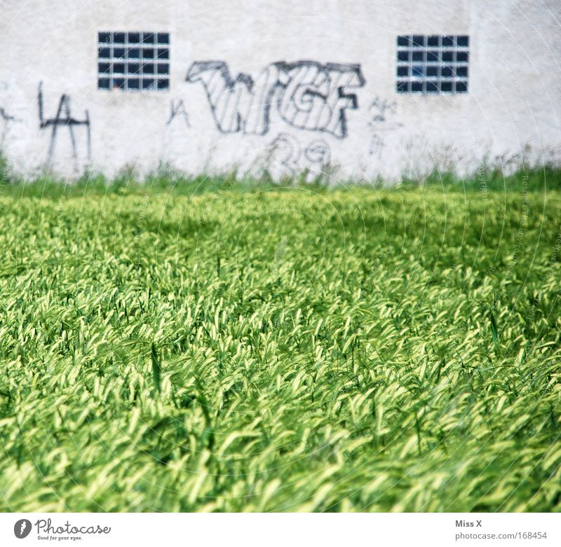 W G F WEIZEN & Grey facade Colour photo Subdued colour Exterior shot Deserted Day Shallow depth of field Nature Graffiti Transience Wheatfield Wall (barrier)