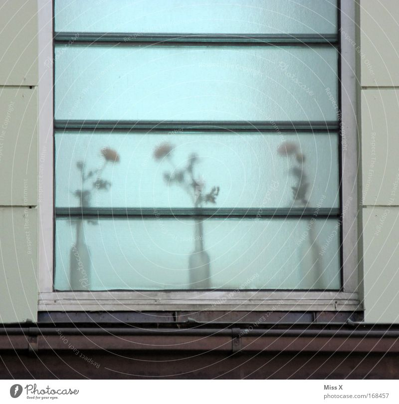frosted glass Subdued colour Exterior shot Deserted Blur Plant Pot plant House (Residential Structure) Window Dirty Gray Flower Flower vase Frosted glass Pane