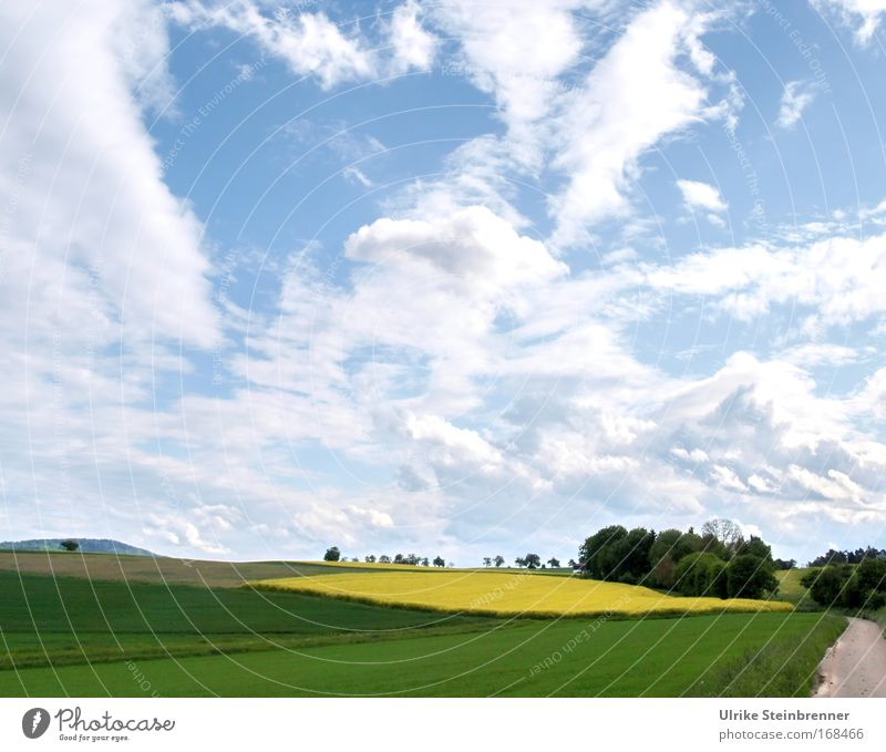 Wide cloudy sky over rape field and forest in spring Colour photo Exterior shot Deserted Day Senses Trip Environment Nature Landscape Plant Air Sky Clouds Sun