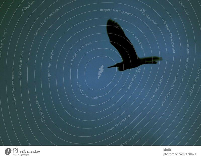 Nature Sky Animal Dark Freedom Air Bird Flying Wing Wild animal Heron Flying animal Grey heron