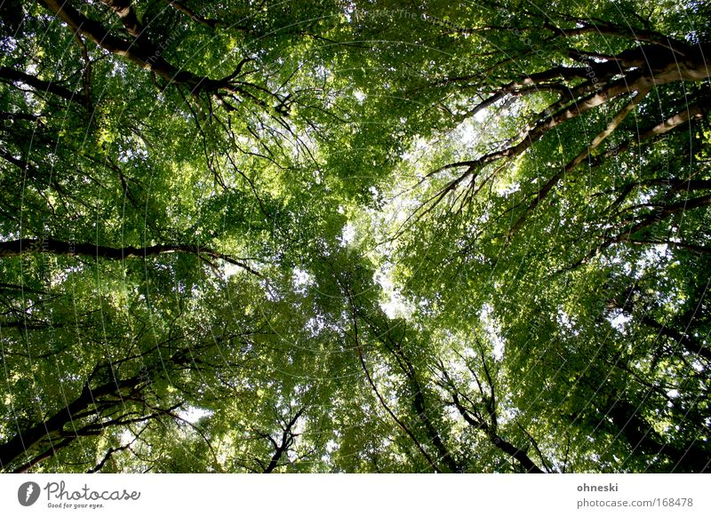 summer forest Colour photo Day Environment Nature Landscape Plant Tree Forest Natural Green Leaf Branch Tree trunk