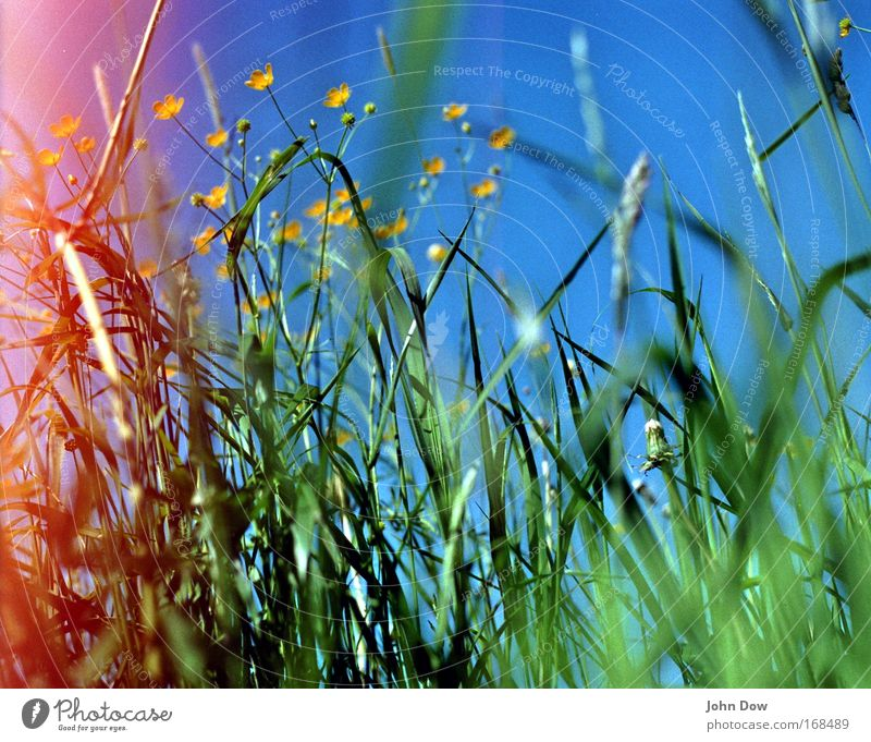 Sky Nature Blue Green Plant Summer Flower Yellow Meadow Warmth Grass Spring Fresh Growth Idyll Beautiful weather
