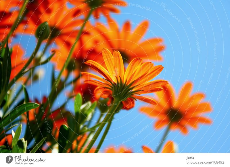 sunday Colour photo Exterior shot Close-up Copy Space right Copy Space top Neutral Background Day Sunlight Shallow depth of field Worm's-eye view Plant Sky