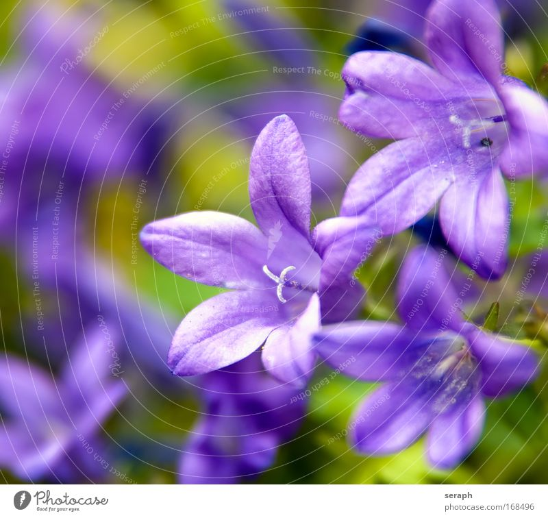 Violett Small Fresh Growth Living thing Cute Botany Gardening Pistil Stamen Florist Floral Natural growth Herb meadow Herb garden Nectar plant