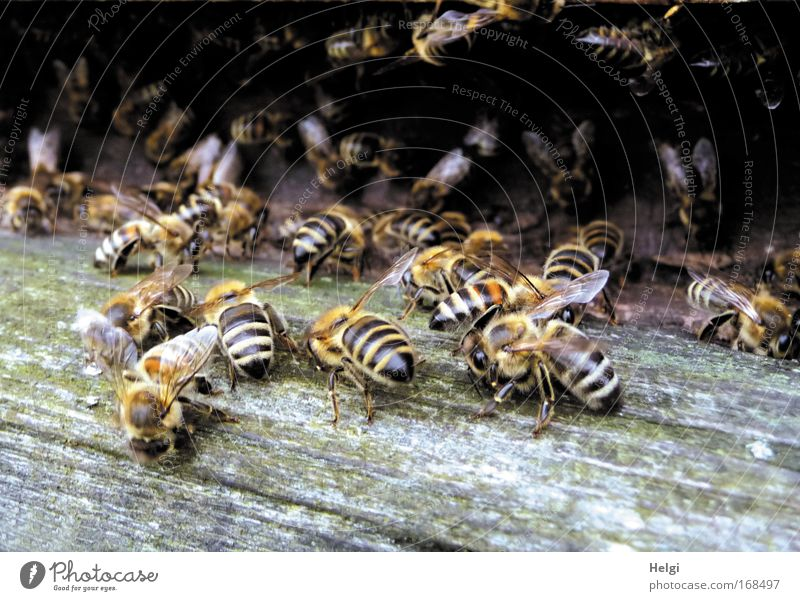many honey bees in one beehive Colour photo Subdued colour Exterior shot Close-up Deserted Copy Space bottom Day Shadow Central perspective Nature Animal