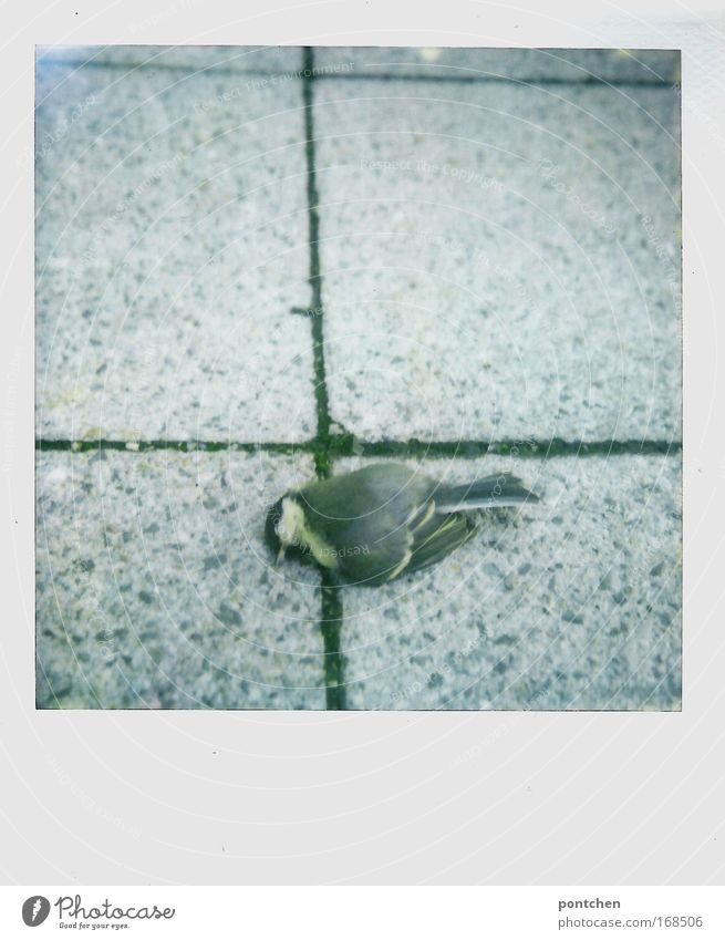 Dead bird on cobblestones. Animal welfare. Nature Street Lanes & trails Dead animal birds 1 Concrete Flying Lie dead Death Grand piano Feather Beak Sadness Gray