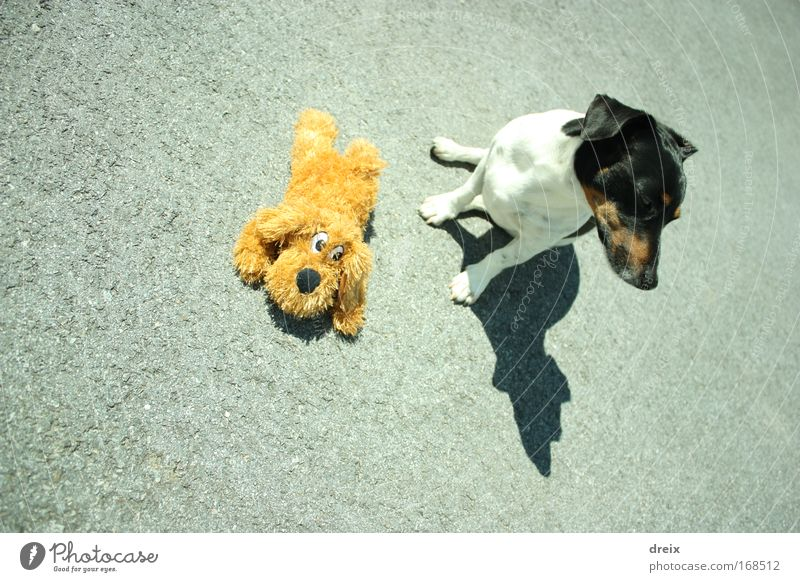 Dog On Asphalt Colour photo Exterior shot Deserted Day Shadow Bird's-eye view Animal portrait Looking away 1 Cuddly toy Relaxation To enjoy Crouch Sit Firm