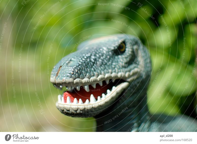 Tyrannosaurus rex Colour photo Exterior shot Detail Day Shallow depth of field Central perspective Animal portrait Upper body Looking into the camera Playing