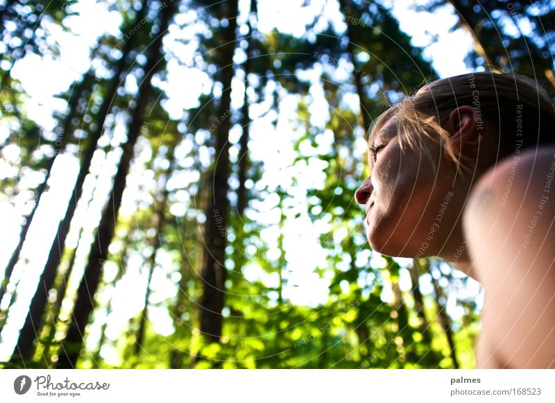 forest face Human being Feminine Young woman Youth (Young adults) Head 1 18 - 30 years Adults Environment Nature Animal Sun Sunlight Spring Summer Tree Leaf