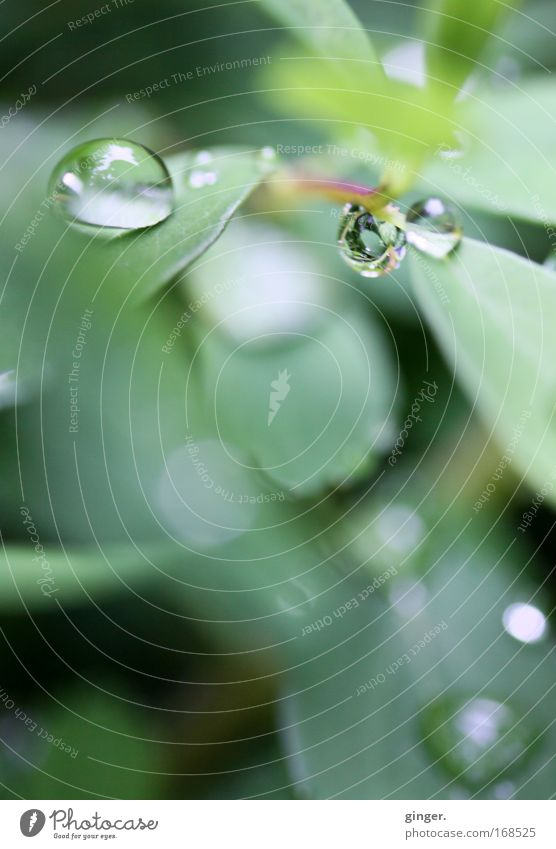 Little treasures Nature Plant Spring Bushes Leaf Foliage plant Green Rain Water Drops of water Transparent Glittering Reflection Deserted Blur Colour photo