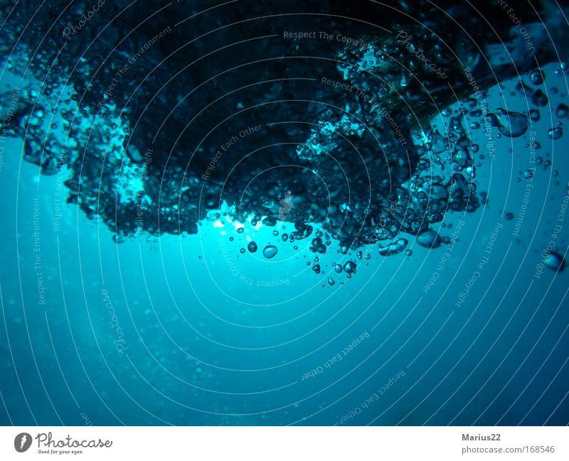 Ocean Air Esthetic Underwater photo Dive Breathe Air bubble Water Water blister