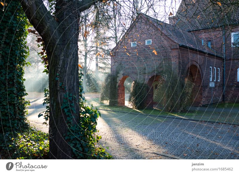 Tree Architecture Wall (building) Autumn Building Wall (barrier) Facade Park Fog Fear Beautiful weather Romance Manmade structures Peaceful Perturbed