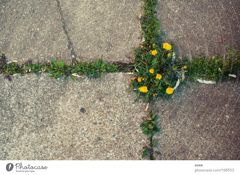 cross Abstract Deserted Day Work of art Environment Nature Landscape Plant Flower Dandelion Park Places Street Stone Concrete Sign Crucifix Growth Authentic