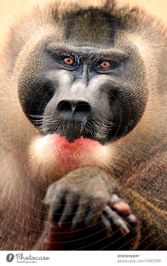 wise Hair and hairstyles Facial hair Beard Animal Wild animal Monkeys 1 Elegant Animal portrait Eyes Face Close-up Detail Portrait photograph