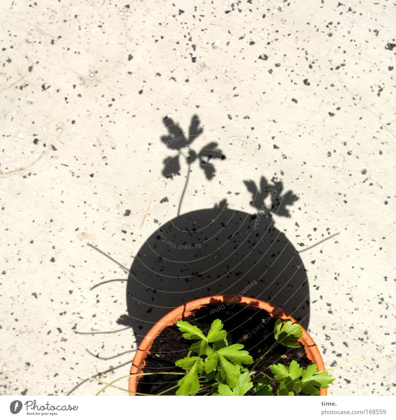 Partial pot eclipse with audience Light Shadow Looking Playing Earth Balcony Observe Going Green Flowerpot over the edge Parsley Pot Clay Clay pot Potting soil