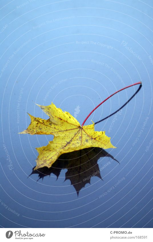 Nature Blue Calm Leaf Yellow Autumn Sadness Grief Esthetic Chestnut leaf Complementary colour