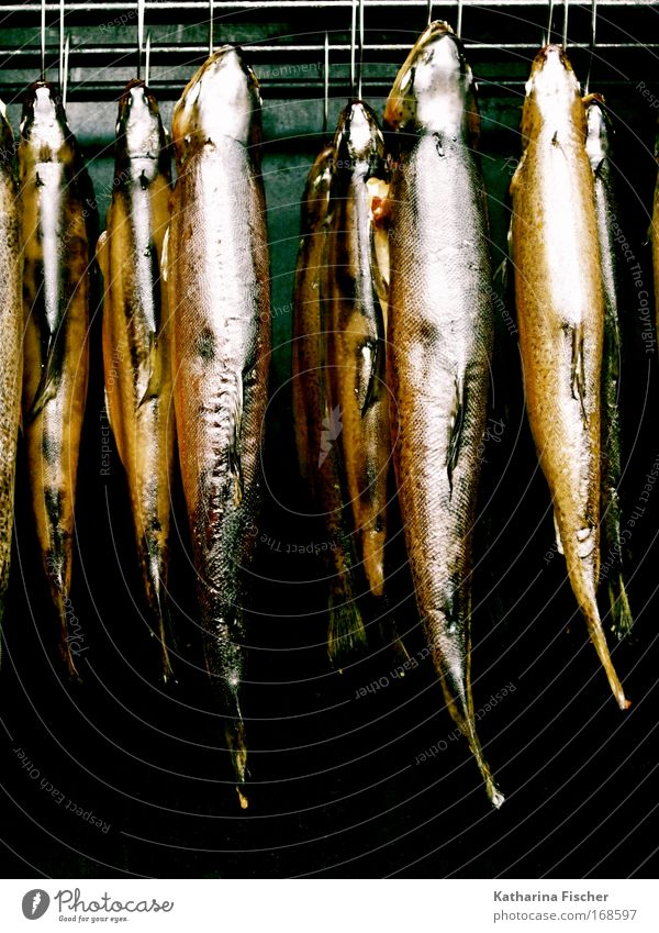 Animal Healthy Eating Food Fresh Fish Hang Markets Fishery Stove & Oven Dead animal Trout Smoked Protein Fish market Kipper