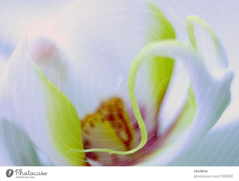 whorls Close-up Macro (Extreme close-up) Plant Flower Orchid Blossom Exotic Protection Warm-heartedness Romance Beautiful Calm Idyll Growth Delicate Fragile