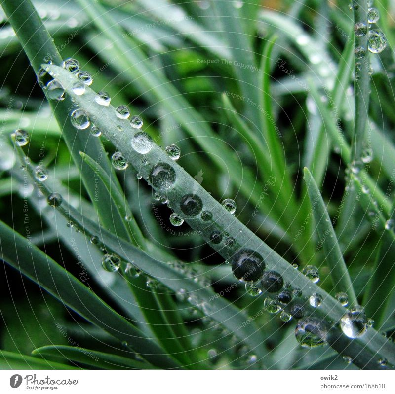 Nature Beautiful Green Plant Grass Rain Glittering Weather Elegant Environment Drops of water Wet Fresh Esthetic Growth Bushes
