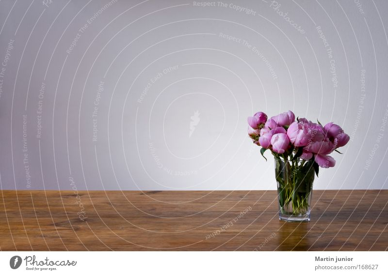 Nature Beautiful Flower Plant Furniture Blossom Wood Gray Brown Glass Pink Table Rose Esthetic Light Fragrance