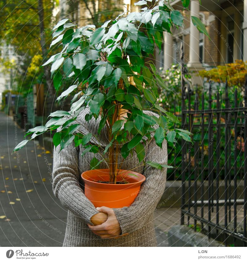 Where am I Human being Feminine Young woman Youth (Young adults) 18 - 30 years Adults Plant Tree Leaf Foliage plant Flowerpot Pot plant Stand Carrying Green