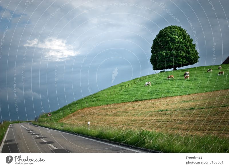 Empty Colour photo Exterior shot Deserted Copy Space left Twilight Wide angle Environment Nature Landscape Plant Animal Summer Climate change Bad weather Tree