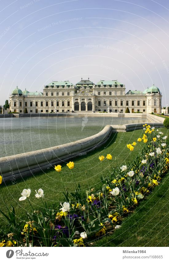 Vienna, only Vienna Colour photo Exterior shot Deserted Day Panorama (View) Capital city Castle Tourist Attraction Art Belvedere Building Sightseeing Tulip
