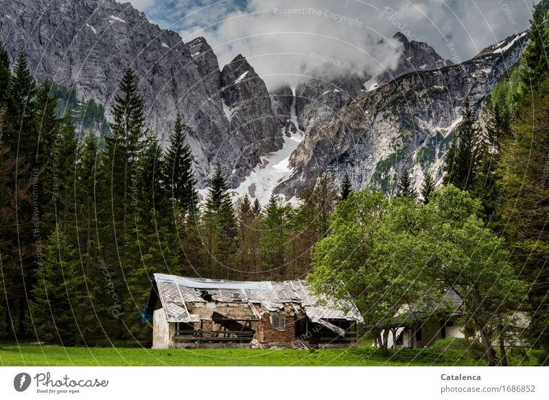 Abandoned home Vacation & Travel Mountain Alpine hut Hiking Landscape Plant Clouds Summer Bad weather Snow Tree Grass Fir tree Deciduous tree Meadow Forest Old
