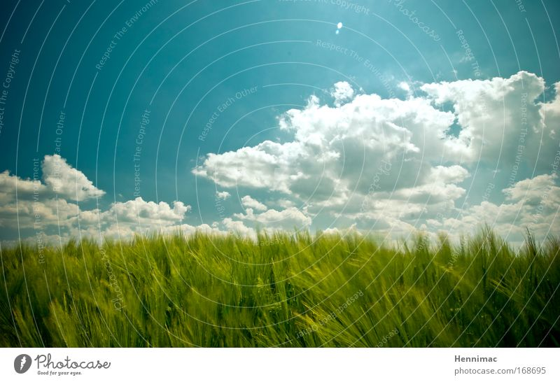 Sky Nature Blue Green Vacation & Travel Summer Animal Clouds Environment Landscape Freedom Grass Air Dream Horizon Wind