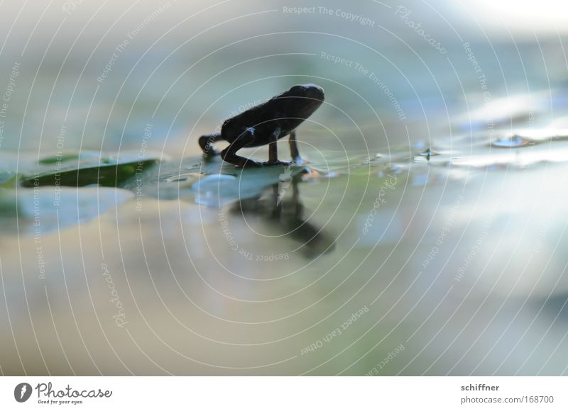 catwalk Colour photo Macro (Extreme close-up) Bog Marsh Pond Lake Animal Frog 1 Movement Going Small Curiosity Cute Discover Environment