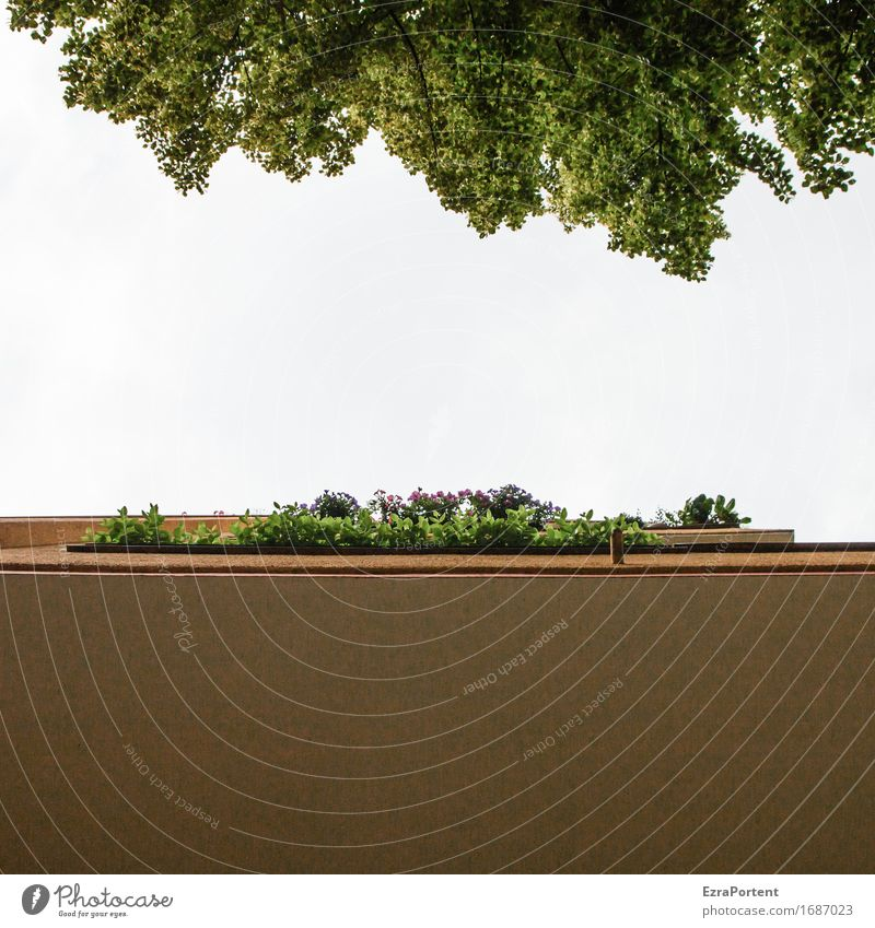 blue sky used to be Sky Spring Summer Plant Tree Leaf House (Residential Structure) Manmade structures Building Architecture Wall (barrier) Wall (building)