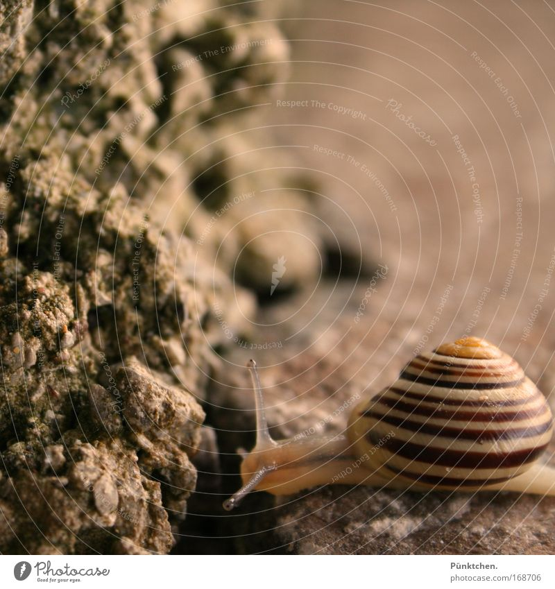 >@---- Subdued colour Exterior shot Close-up Deserted Copy Space right Copy Space top Evening Blur Animal portrait Looking Rock Snail 1 Observe Thin Slimy Brown