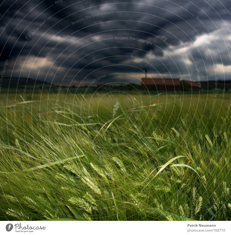 Nature Blue Plant Green Summer Landscape Clouds Dark Black Environment Spring Grass Rain Weather Field Growth