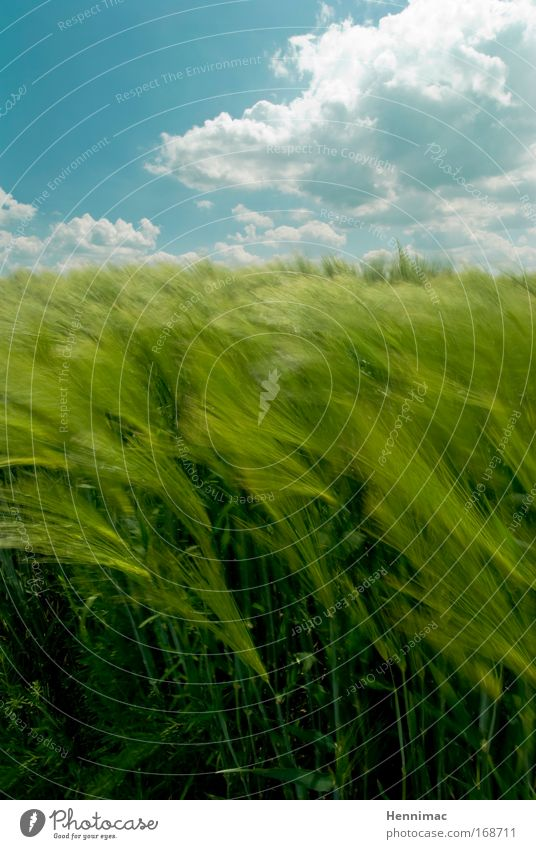 Nature Sky Green Blue Summer Vacation & Travel Clouds Animal Grass Freedom Dream Landscape Air Field Wind Environment