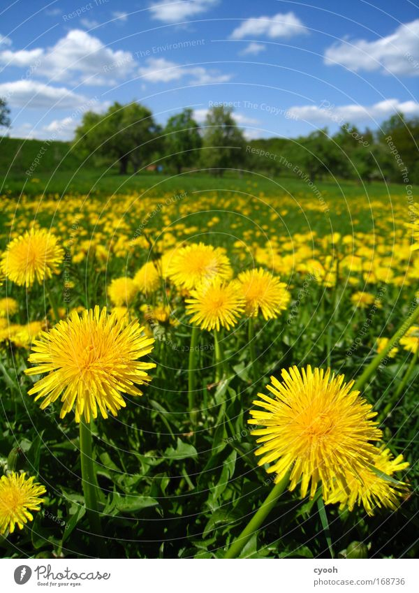 Nature Sky Flower Green Blue Plant Summer Calm Animal Yellow Life Meadow Blossom Grass Spring Happy