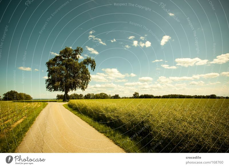 Nature Sky Sun Plant Summer Clouds Street Spring Landscape Air Field Road traffic Weather Environment Earth Esthetic