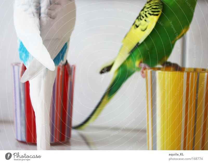 Blue Green White Red Animal Yellow Natural Bird Pink Flying Masculine Pair of animals Wild animal In pairs Feather Stripe