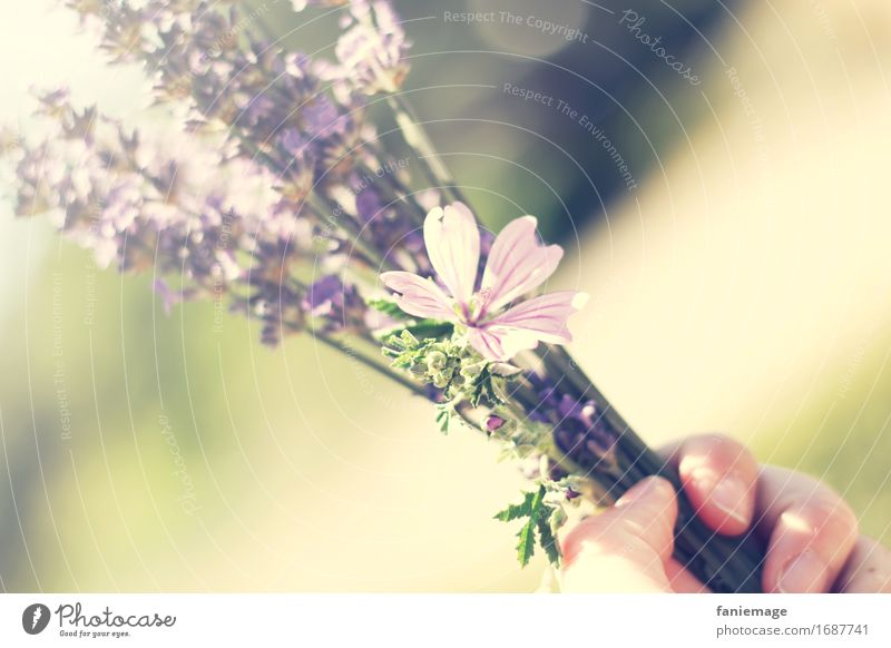 Nature Summer Hand Flower Joy Warmth Blossom Feasts & Celebrations Bright Field Blossoming Beautiful weather Violet Bouquet Summer vacation South