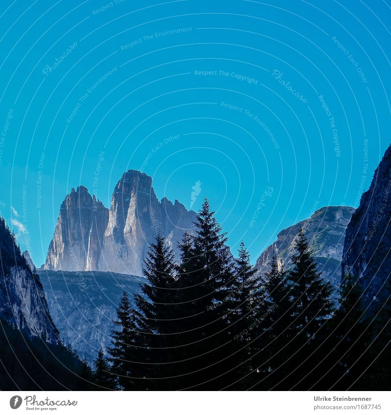 Three Peaks View 2 Summer Mountain Environment Nature Landscape Plant Cloudless sky Beautiful weather Tree Fir tree Forest Rock Alps Dolomites Three peaks Tall