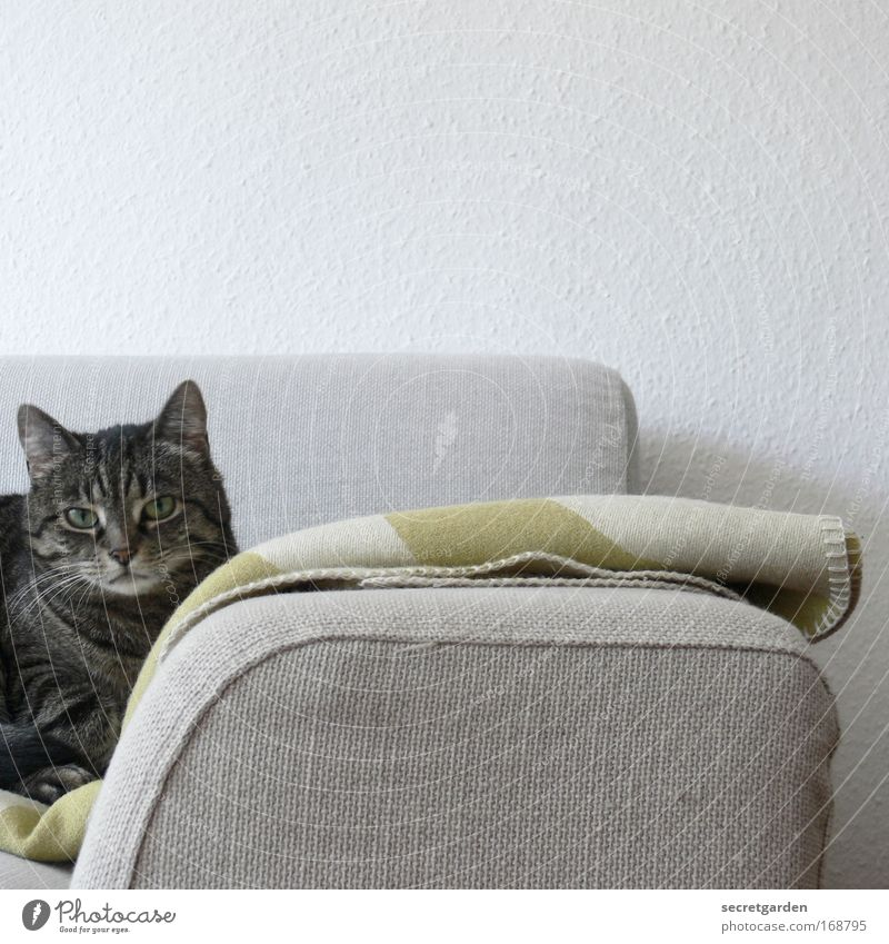 White Green Loneliness Animal Relaxation Gray Sadness Cat Warmth Contentment Television Wait Flat (apartment) Design Arrangement Cool (slang)