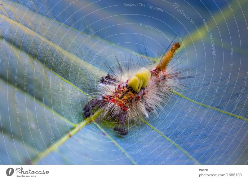The hairy monster in my garden Nature Animal Punk Facial hair Hair Hairy chest Butterfly Crawl Threat Exotic Creepy Puzzle Environmental protection Habitat