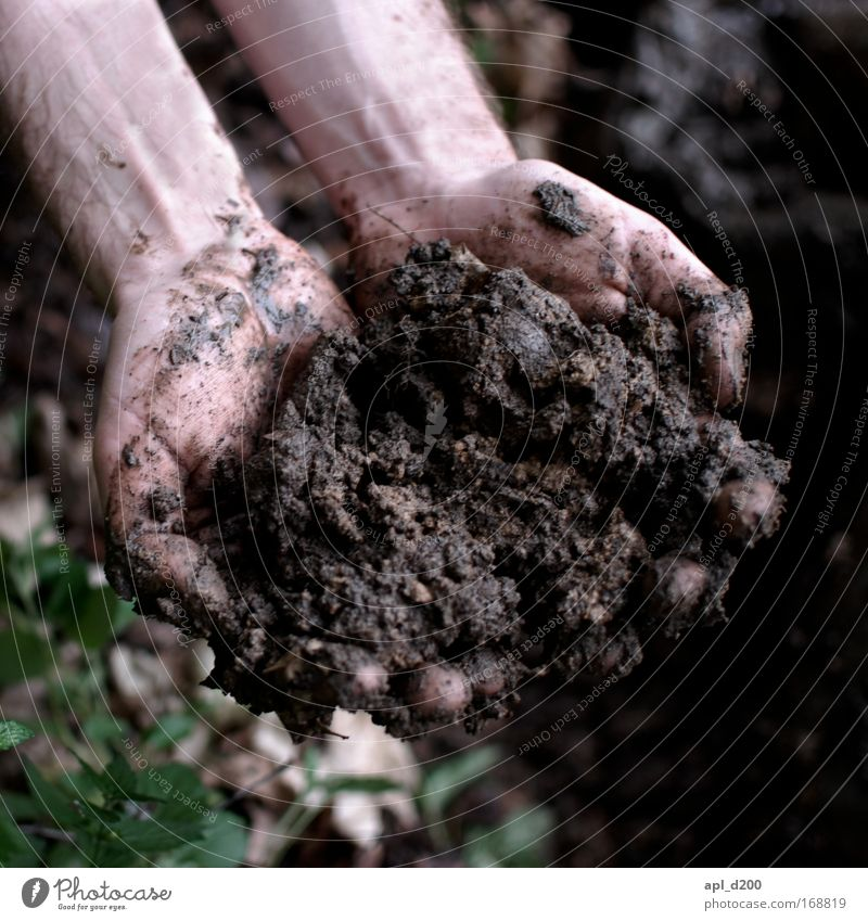 Human being Nature Hand Green Plant Adults Environment Playing Grass Brown Earth Dirty Masculine Esthetic Bushes Warm-heartedness
