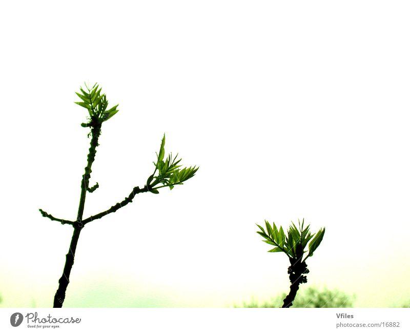 Nature Bud Blossom
