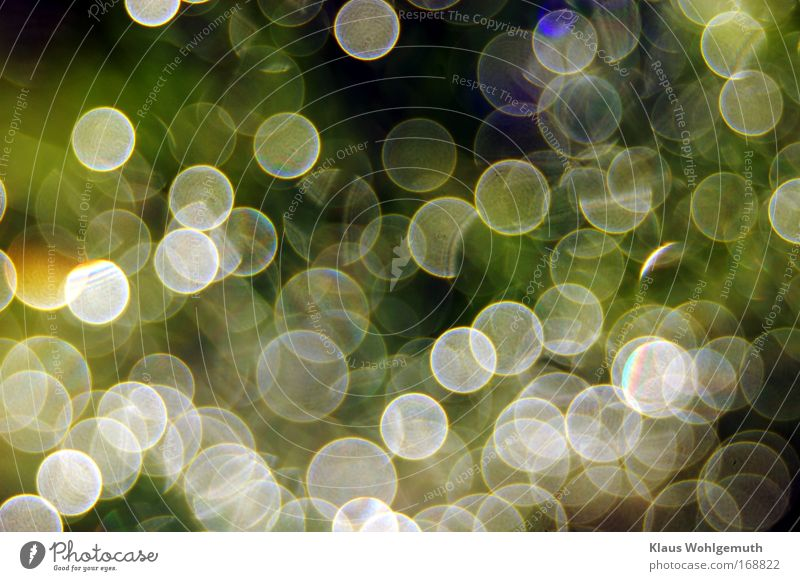 Nature Water Beautiful Green Blue Plant Spring Dream Warmth Moody Diamond Happiness Precious stone Romance Climate Illuminate
